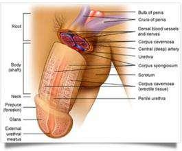 男性医治阳痿的方案是什么